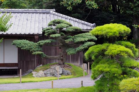 御殿と松之木
