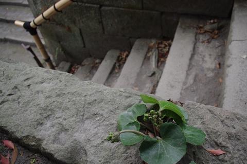 階段の番人(あなたのお名前は?)