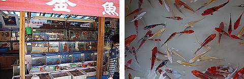 金魚や鯉も売ってた