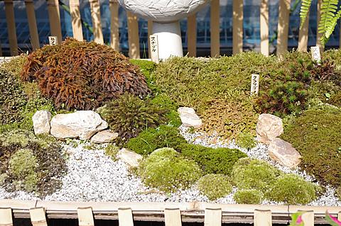 ミニ庭園が素晴らしかった