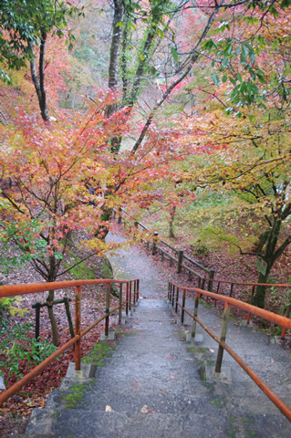 紅葉とオレンジの階段