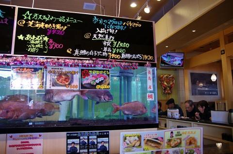 今日は「長島産 真鯛」