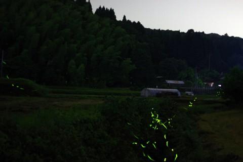 鹿児島県薩摩川内市入来町でホタル観賞